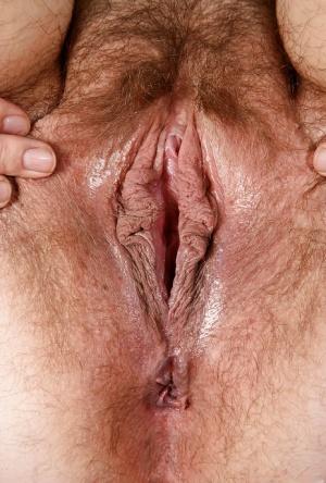 Hairy Chubby Pussy Pics